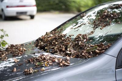 Blätter auf Auto