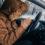 Auto Heizlüfter – was bringen die günstigen Alternativen zur Standheizung?